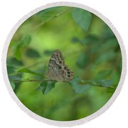 Northern Pearly Eye Butterfly Round Beach Towel
