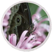 Northern Pearly-eye On Pink Round Beach Towel