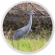 November Sandhill Crane Round Beach Towel