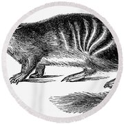 Numbat Round Beach Towel