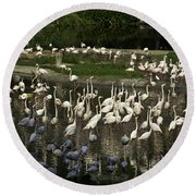 Number Of Flamingoes Inside The Jurong Bird Park In Singapore Round Beach Towel