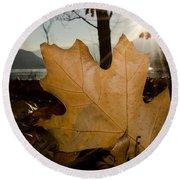 Oak Leaf In Backlight Round Beach Towel