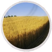 Oat Crops On A Landscape, County Dawn Round Beach Towel