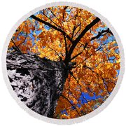 Old Elm Tree In The Fall Round Beach Towel