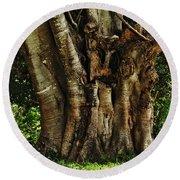 Old Fig Tree Round Beach Towel by Kaye Menner