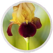 Old Time Two Toned Burgundy And Gold Iris Round Beach Towel