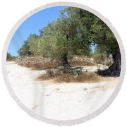 Olive Trees In Samaria Round Beach Towel