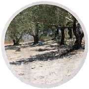 Olive Trees In Sebastia Nablus Round Beach Towel