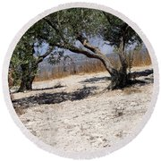 Olive Trees Standing Alone Round Beach Towel