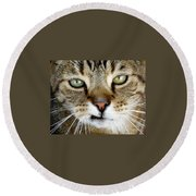 Oliver The Cat Round Beach Towel