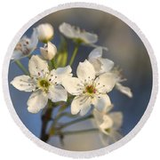 One Fine Morning In Bradford Pear Blossoms Round Beach Towel
