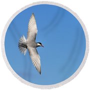 One Good Tern Deserves Another Round Beach Towel