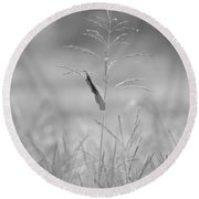 One Tall Blade Of Grass On A Foggy Morn - Bw Round Beach Towel