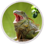 Open Mouth Iguana Round Beach Towel