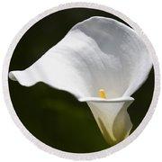 Open White Calla Lily V Round Beach Towel