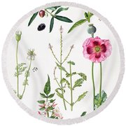 Opium Poppy And Other Plants  Round Beach Towel by  Elizabeth Rice