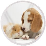 Orange-and-white Beagle Pup And Alpaca Round Beach Towel