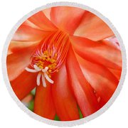 Orange Cactus Round Beach Towel