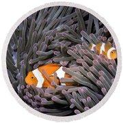 Orange Clownfish In An Anemone Round Beach Towel