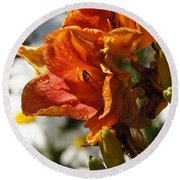 Orange Day Lilies In The Sun Round Beach Towel