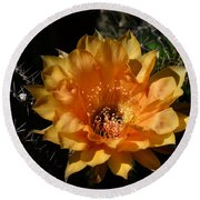 Orange Echinopsis Flower  Round Beach Towel