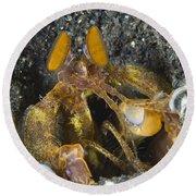 Orange Mantis Shrimp In Its Burrow Round Beach Towel
