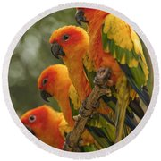 Orange Parakeets Chiang Mai Thailand Round Beach Towel