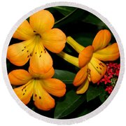 Orange Rhododendron Flowers Round Beach Towel