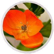 Orange Star   Round Beach Towel
