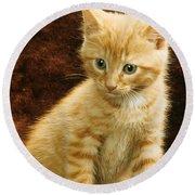 Orange Tabby Mixed Breed Kitten  Round Beach Towel