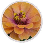 Orange Zinnia_9475_4267 Round Beach Towel