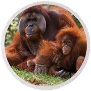 Orangutan Mother And Baby Round Beach Towel
