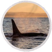 Orca At Sunset Round Beach Towel