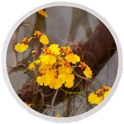 Orchid - Golden Morning  Round Beach Towel