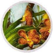Orchid - Oncidium - Ripened   Round Beach Towel
