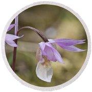 Orchid Calypso Bulbosa - 1 Round Beach Towel