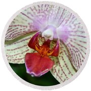 Orchid Close Up Round Beach Towel