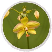 Orchid Number 1 Round Beach Towel
