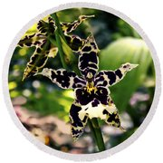 Orchid Study Round Beach Towel