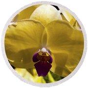 Orchid Study Vi Round Beach Towel
