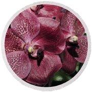 Orchid Vanda And Ascocenda Hybrid II Round Beach Towel