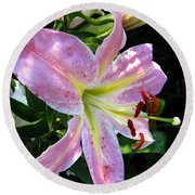 Oriental Lily Named Tom Pouce Round Beach Towel