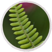 Ornamental Fern Round Beach Towel