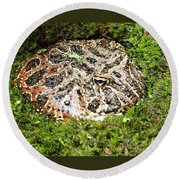 Ornate Horned Frog Round Beach Towel