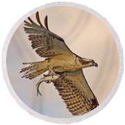 Osprey Catches Big Fish Round Beach Towel