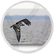 Osprey Grab Round Beach Towel