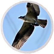 Osprey I Round Beach Towel