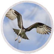 Osprey In Flight One Round Beach Towel