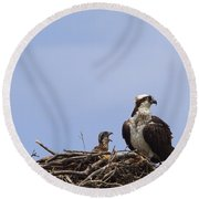Osprey Mother And Chick Round Beach Towel