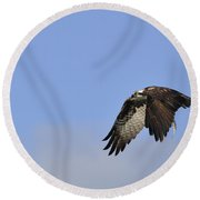 Osprey On The Move Round Beach Towel
